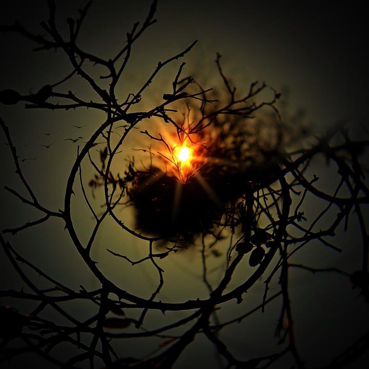 Why Nest inCity?